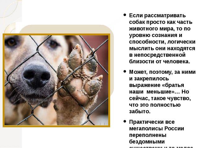 Если рассматривать собак просто как часть животного мира, то по уровню сознан...