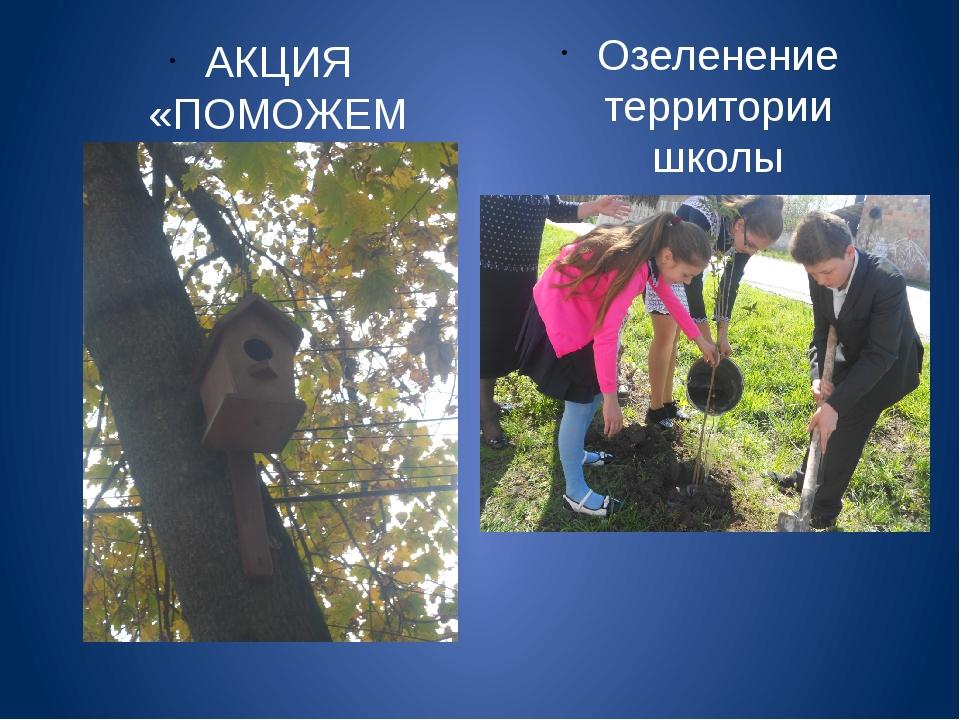 АКЦИЯ «ПОМОЖЕМ ПЕРНАТЫМ ДРУЗЬЯМ» Озеленение территории школы
