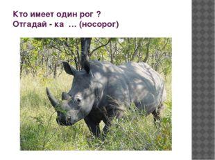 Кто имеет один рог ? Отгадай - ка … (носорог)