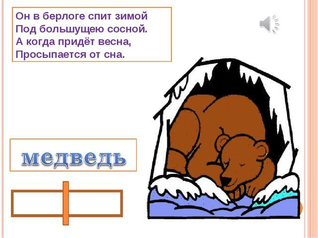 Он в берлоге спит зимой Под большущею сосной. А когда придёт весна, Просыпает...
