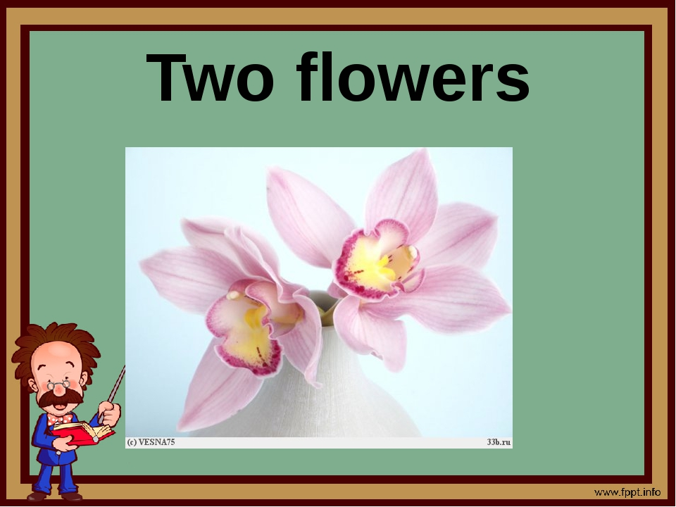 Two flowers
