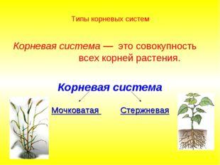 Типы корневых систем Корневая система — это совокупность всех корней растения
