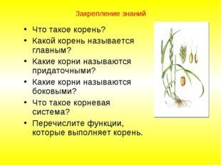 Закрепление знаний Что такое корень? Какой корень называется главным? Какие к