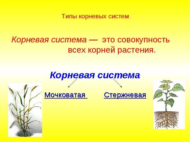 Типы корневых систем Корневая система — это совокупность всех корней растения...