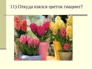 11) Откуда взялся цветок гиацинт?