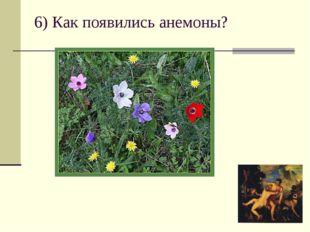 6) Как появились анемоны?