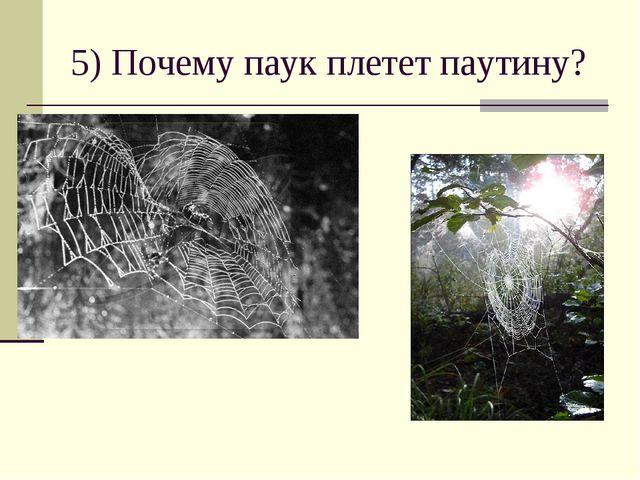 5) Почему паук плетет паутину?