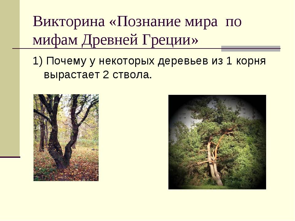Викторина «Познание мира по мифам Древней Греции» 1) Почему у некоторых дерев...
