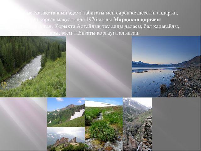 Шығыс Қазақстанның әдемі табиғаты мен сирек кездесетін аңдарын, өсімдіктерін...
