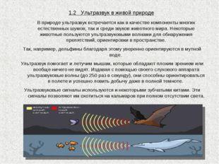 1.2 Ультразвук в живой природе В природе ультразвук встречается как в качест
