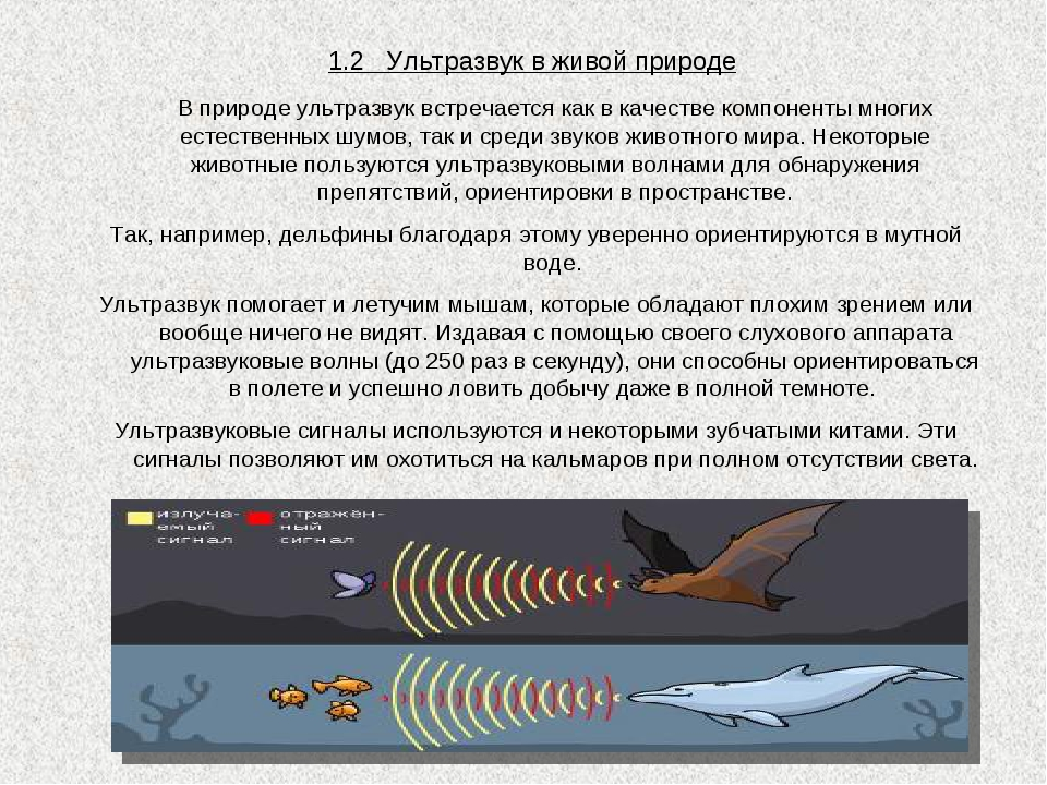 1.2 Ультразвук в живой природе В природе ультразвук встречается как в качест...