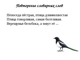 Повторение словарных слов Непоседа пёстрая, птица длиннохвостая Птица говорли