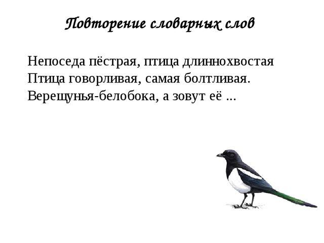 Повторение словарных слов Непоседа пёстрая, птица длиннохвостая Птица говорли...