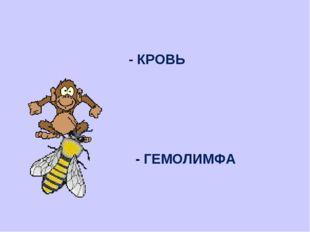 - КРОВЬ - ГЕМОЛИМФА