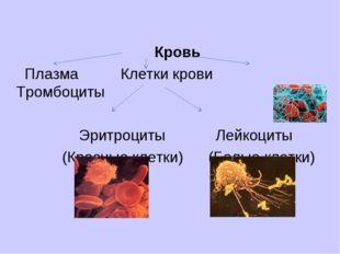 Кровь Плазма Клетки крови Тромбоциты Эритроциты Лейкоциты (Красные клетки) (