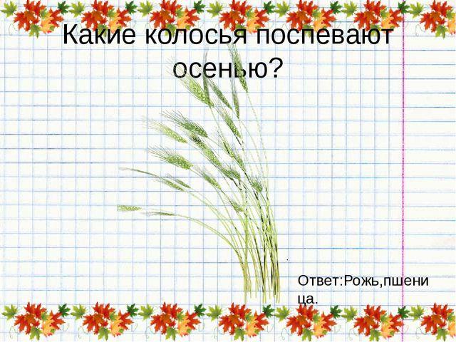Какие колосья поспевают осенью? Ответ:Рожь,пшеница.