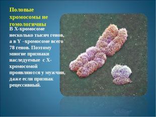 Половые хромосомы не гомологичны В Х-хромосоме несколько тысяч генов, а в Y –