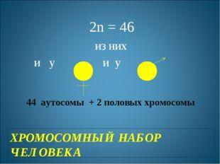 ХРОМОСОМНЫЙ НАБОР ЧЕЛОВЕКА 2n = 46 из них и у и у 44 аутосомы + 2 половых хро