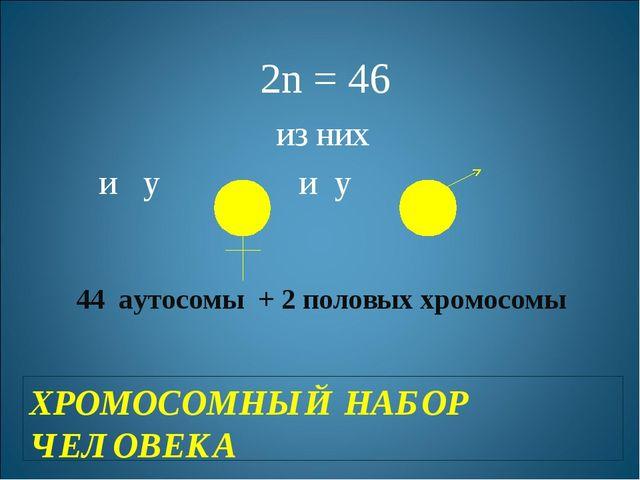 ХРОМОСОМНЫЙ НАБОР ЧЕЛОВЕКА 2n = 46 из них и у и у 44 аутосомы + 2 половых хро...