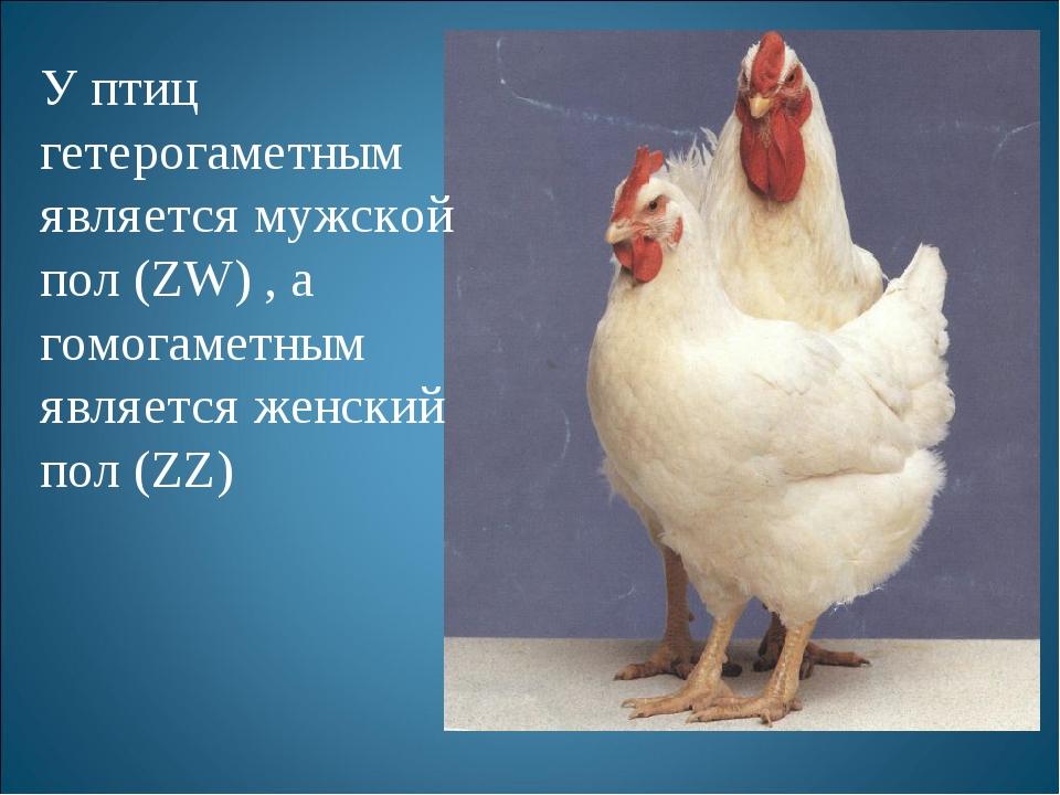 У птиц гетерогаметным является мужской пол (ZW) , а гомогаметным является жен...