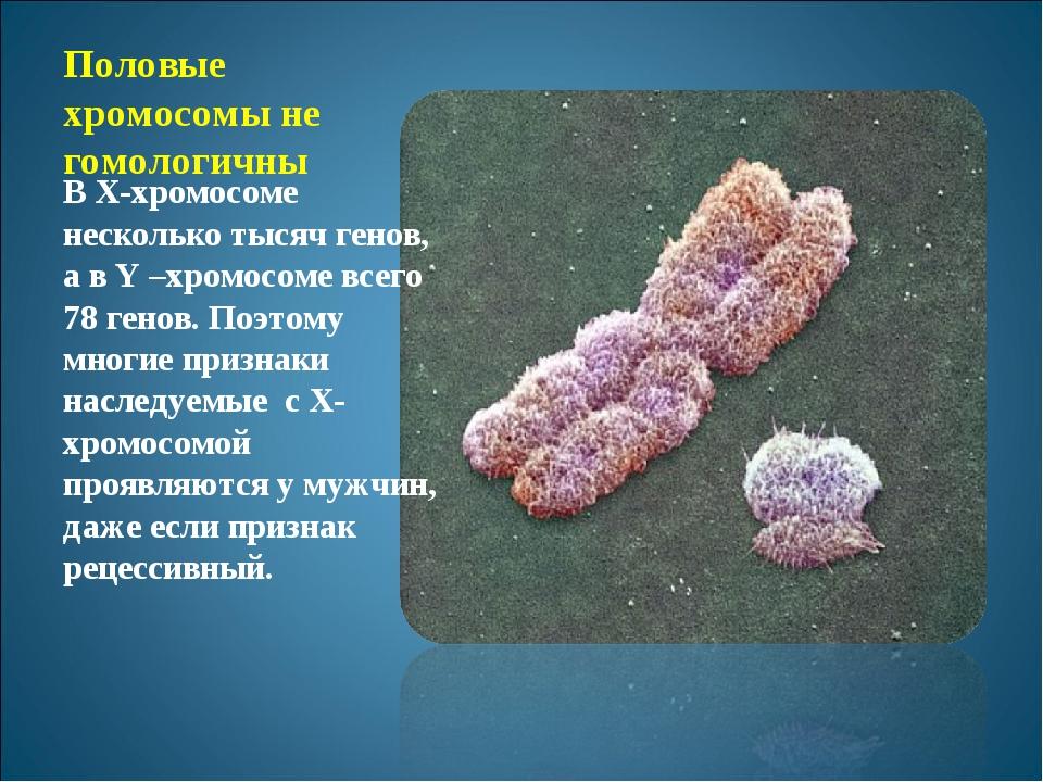 Половые хромосомы не гомологичны В Х-хромосоме несколько тысяч генов, а в Y –...