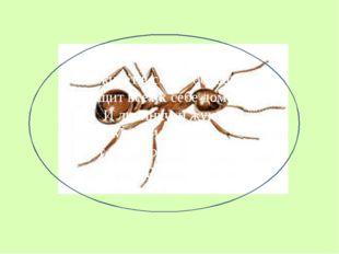 Он живёт в семье большой, Тащит всех к себе домой: И личинку, и жука, Муху и