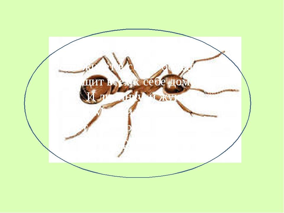 Он живёт в семье большой, Тащит всех к себе домой: И личинку, и жука, Муху и...