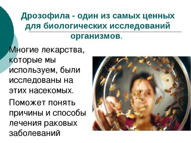Дрозофила - один из самых ценных для биологических исследований организмов....