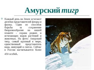 Амурский тигр Каждый день на Земле исчезают десятки представителей флоры и фа