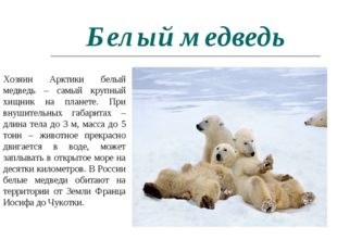 Белый медведь Хозяин Арктики белый медведь – самый крупный хищник на планете.