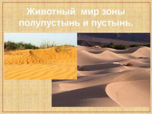 Животный мир зоны полупустынь и пустынь.