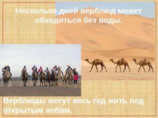 Несколько дней верблюд может обходиться без воды. Верблюды могут весь год жит
