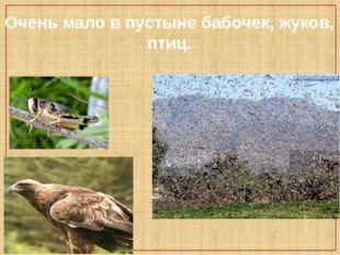 Очень мало в пустыне бабочек, жуков, птиц.