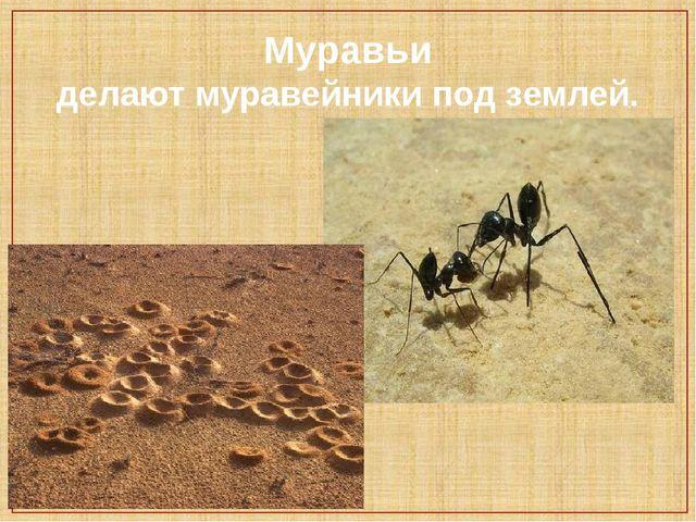Муравьи делают муравейники под землей.