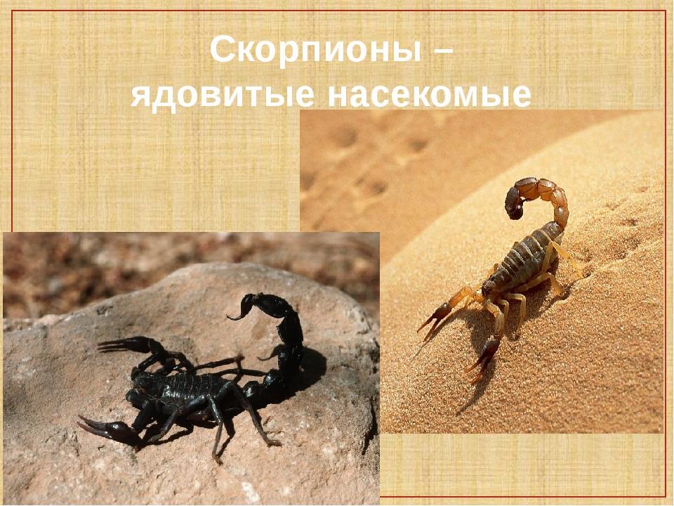 Скорпионы – ядовитые насекомые