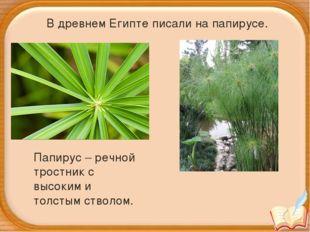 Папирус – речной тростник с высоким и толстым стволом. В древнем Египте писа