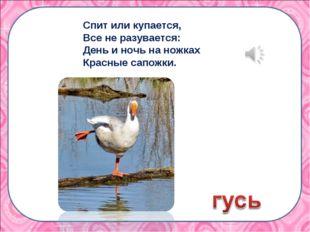 Спит или купается, Все не разувается: День и ночь на ножках Красные сапожки.