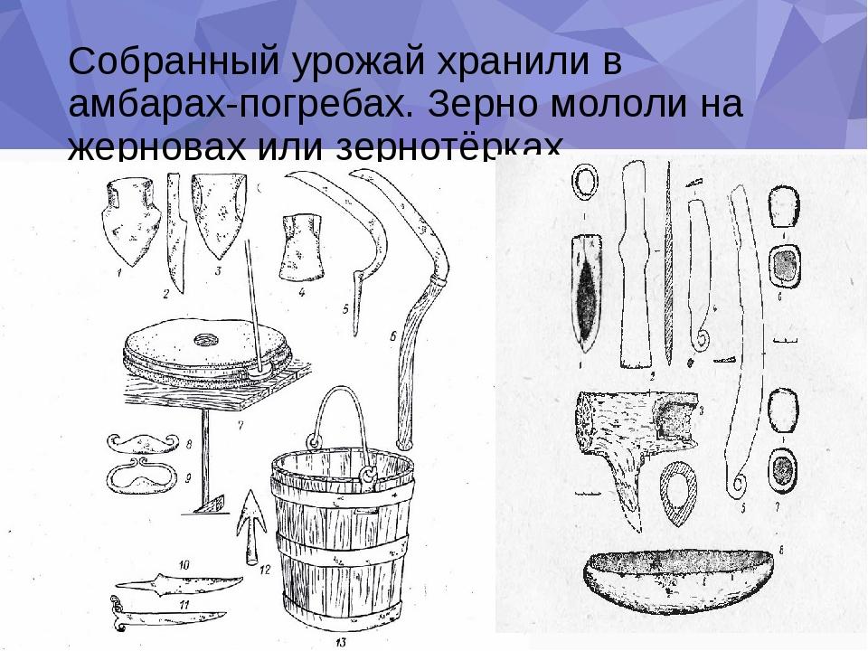 Собранный урожай хранили в амбарах-погребах. Зерно мололи на жерновах или зер...