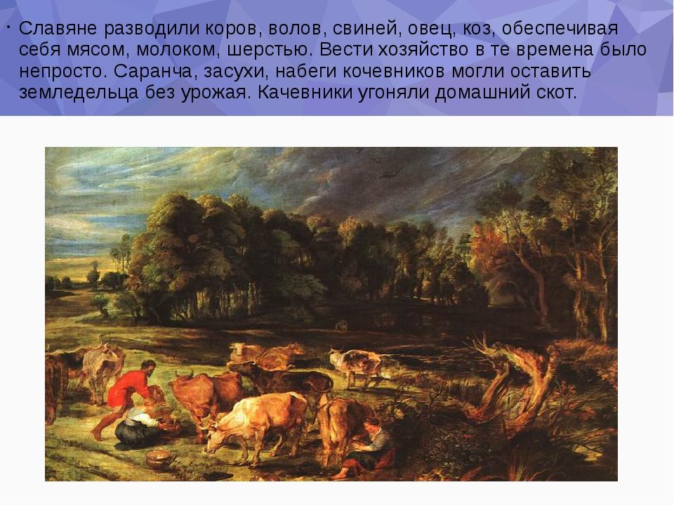Славяне разводили коров, волов, свиней, овец, коз, обеспечивая себя мясом, мо...