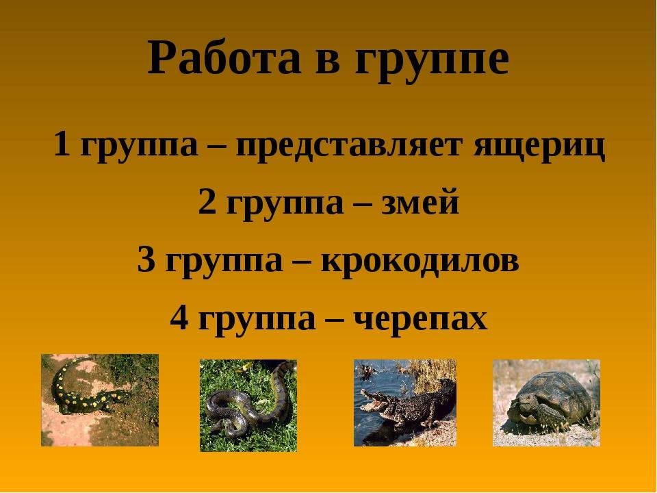 Работа в группе 1 группа – представляет ящериц 2 группа – змей 3 группа – кро...