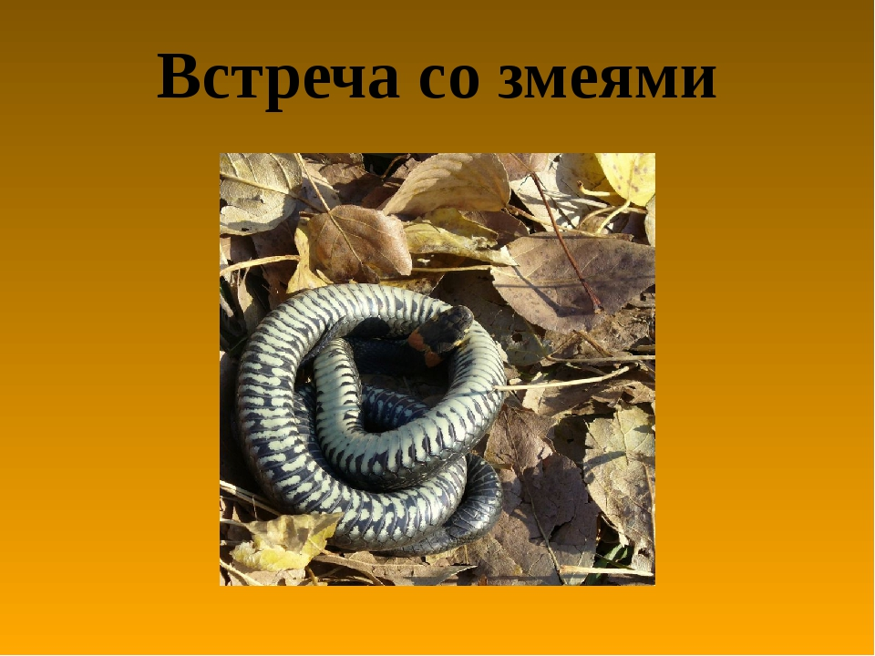 Встреча со змеями