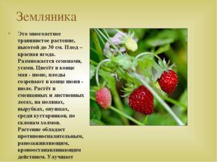 Земляника Это многолетнее травянистое растение, высотой до 30 см. Плод – крас