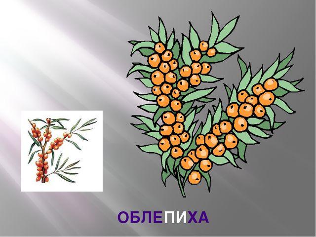 ОБЛЕПИХА