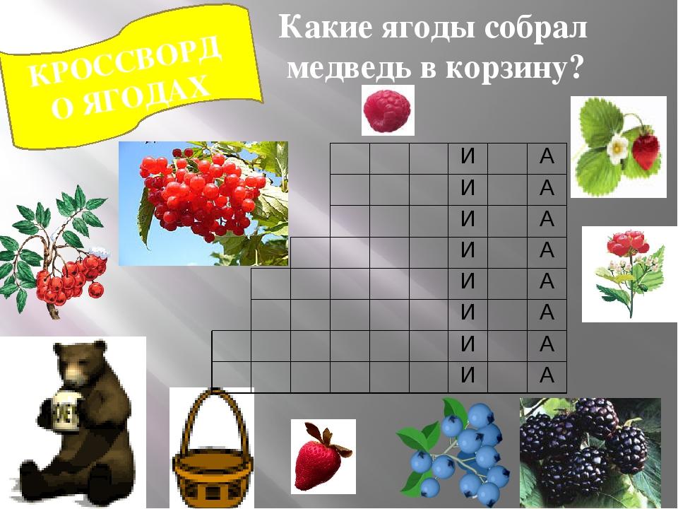 КРОССВОРД О ЯГОДАХ Какие ягоды собрал медведь в корзину? И А И А И А И А И А...