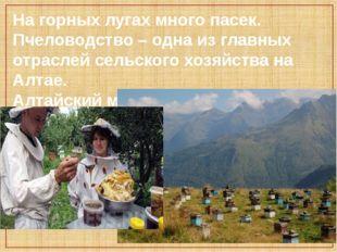 На горных лугах много пасек. Пчеловодство – одна из главных отраслей сельског