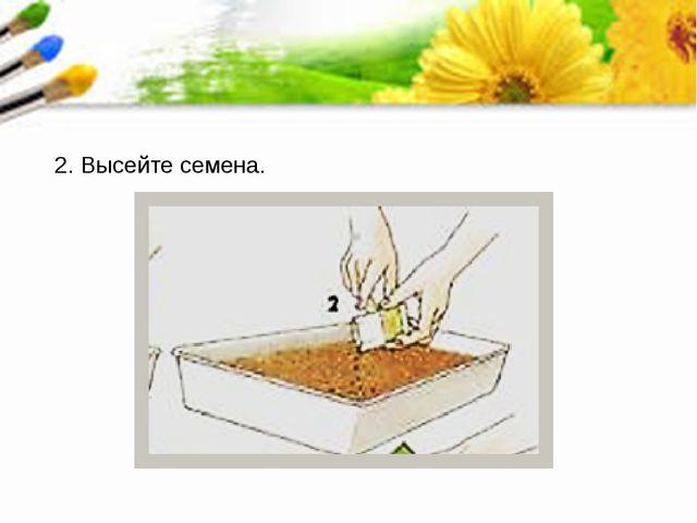 2. Высейте семена.