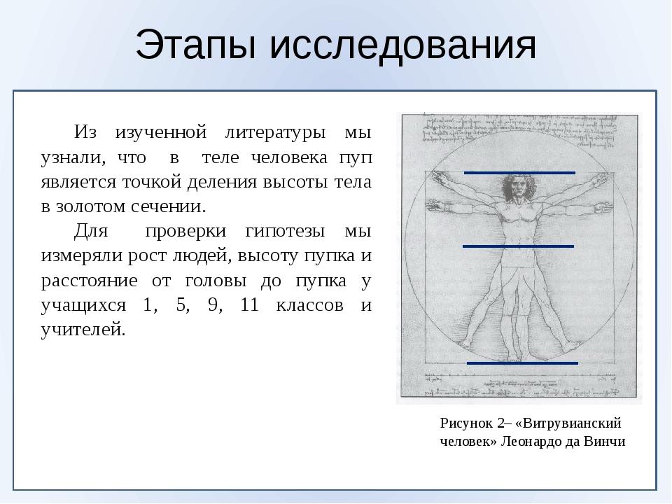 Этапы исследования Рисунок 2– «Витрувианский человек» Леонардо да Винчи Из...