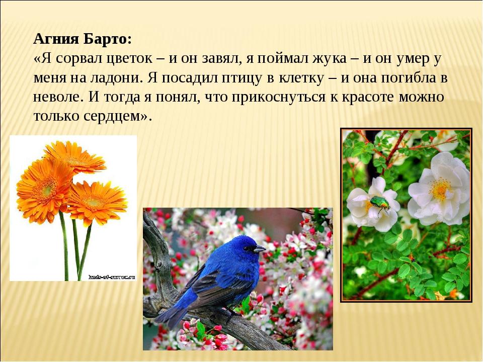 Агния Барто: «Я сорвал цветок – и он завял, я поймал жука – и он умер у меня...