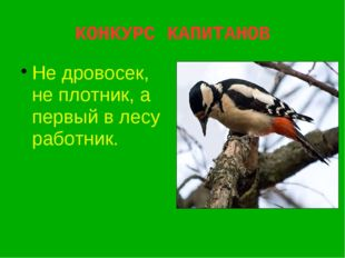КОНКУРС КАПИТАНОВ Не дровосек, не плотник, а первый в лесу работник.