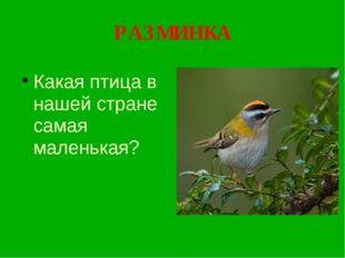 РАЗМИНКА Какая птица в нашей стране самая маленькая?